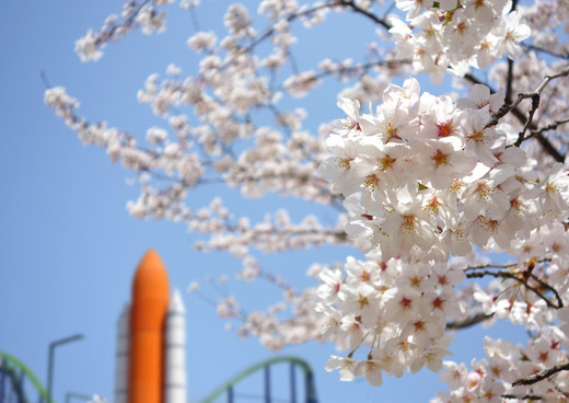 Spaceworld_sakura05