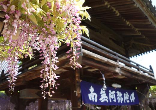 Kichijoji_wisteria15