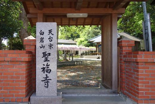 Shofukuji_wisteria02