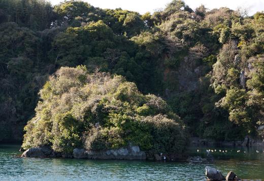 Tsumura_island25